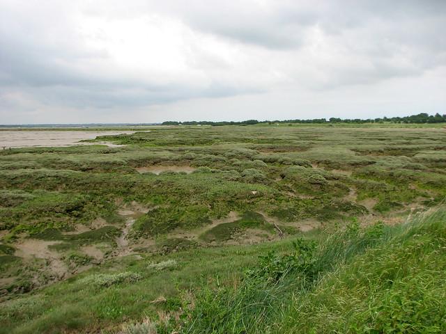 Marshes on Mersea Island