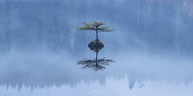 'Disembodied' - Fairy Tree. Fairy Lake, Vancouver Island