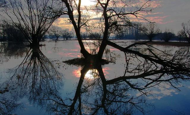 Winter flood reflections on the Sajó-Tisza floodplain