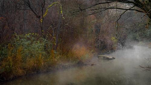 mist misty fog foggy creek stream bullcreek austin texas texashillcountry trees