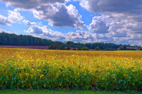 hdr maryland flowers landscape