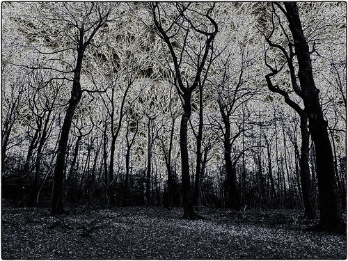 enchanted forest | by AngyDS