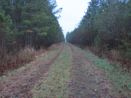 Photo of dirt road leading into the woods