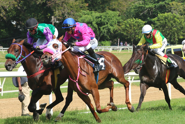 Boxing Day Racing
