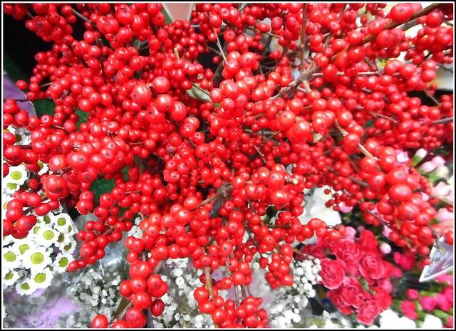 Ilex Berries ..