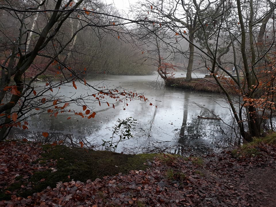 Epping Forest in December