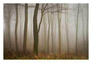 Friston Forest - December 20th