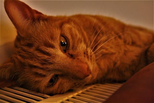 8/365: Cat On A Hot Tin Radiator