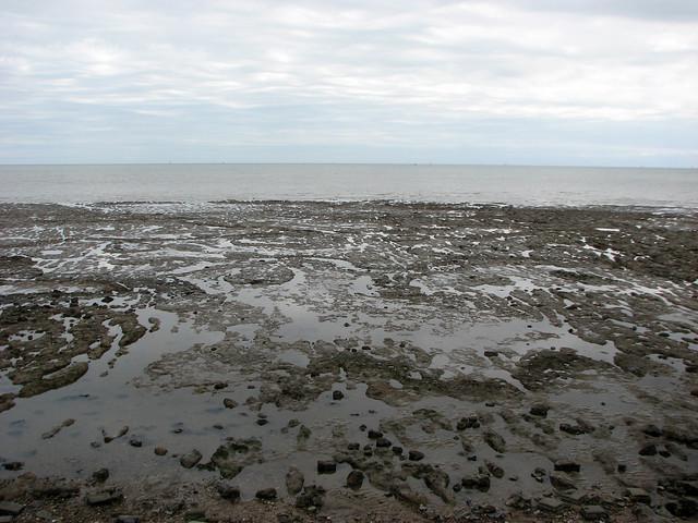 Marshy coast at Mersea Island