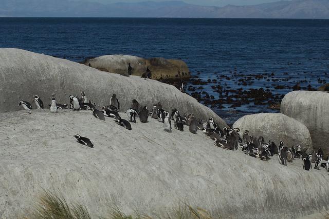 Cape Town, Boulders Beach 01