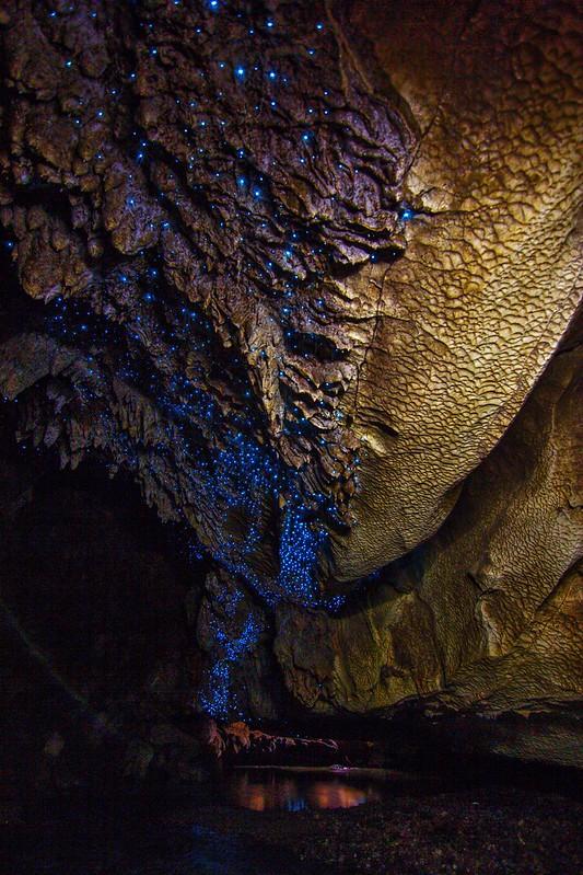 Glowworms in Waipu Cave (NZ)