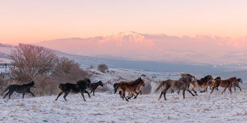 livno federacijabosneihercegovine bosnienundherzegowina ba horse wild wildhorse sunrise mountains landscape adventure photojournalism travel