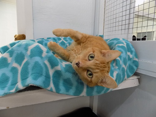Claire - 8 year old spayed female | by carescatshelter