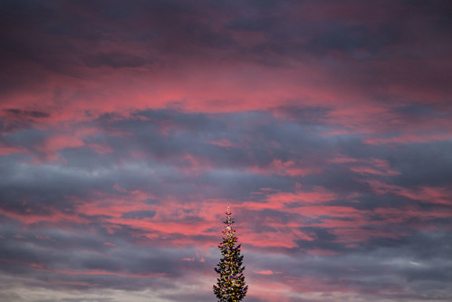 tree trees christmas christmastree sunset pink sunsets pinksunset sky clouds