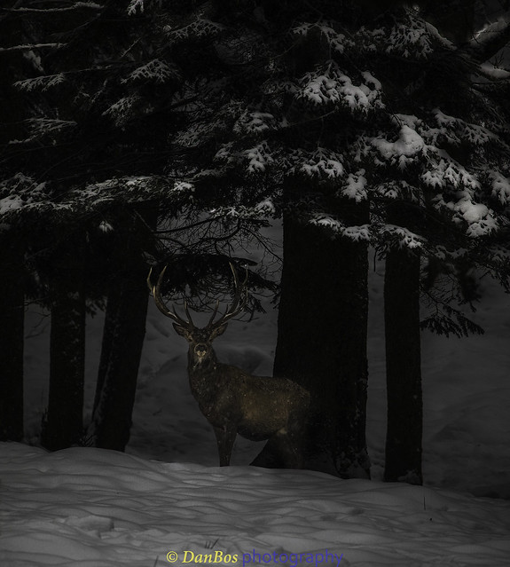 Deer in the Dark