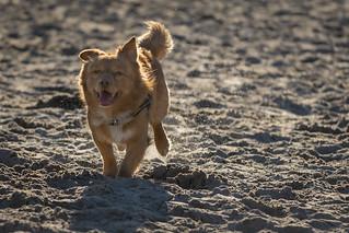 Doggyshoot Soesterduinen.   by Angelbattle bros