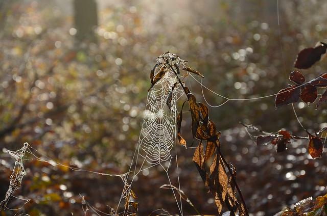 DSC_8670 Spinnennetz mit Bokeh - Spider web with Bokeh