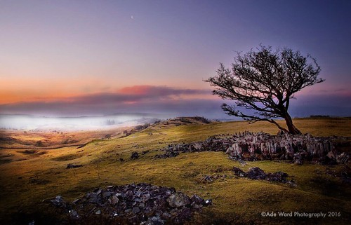 tree lonetree winter wilderness nature rural sunrise mist brecon ystradfellte