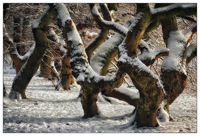 Tanzende Bäume – dancing trees