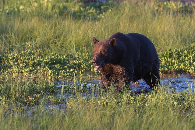 Karhu Kuusamo