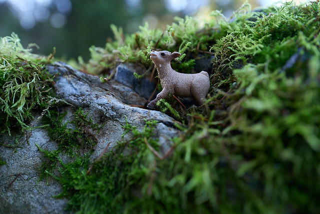 little baby goat shelters in a crevice  on Moss Mountain