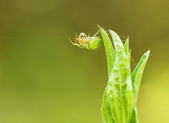 spider work in progress