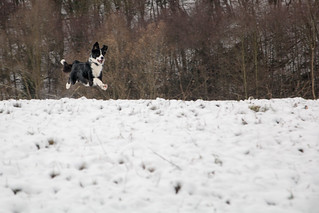 Lourse des neiges (3)   by Korf-Adri