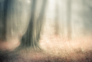 J'aime cet arbe formé de deux troncs..I love this tree with its two trunks. | by montier_isabelle