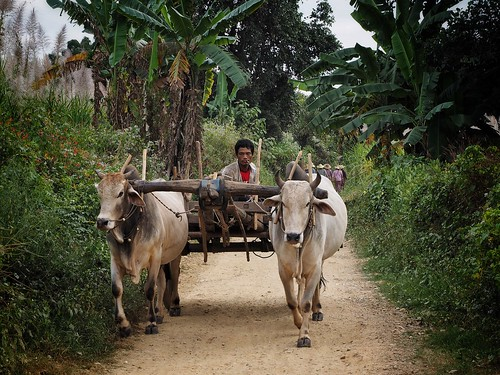 rural transport   by paddy_bb