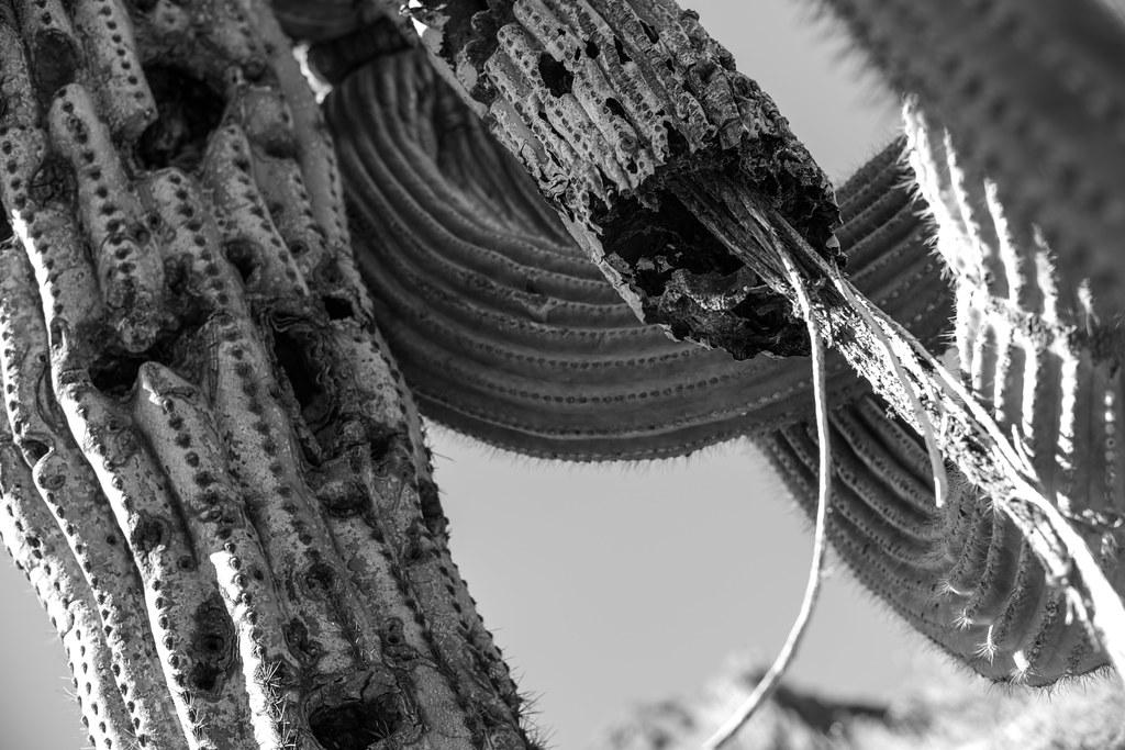 vegetal cabling