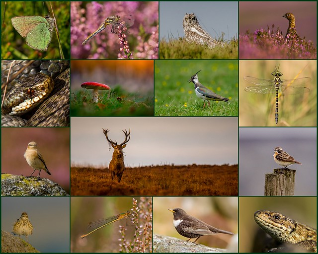 A Year on the Moors