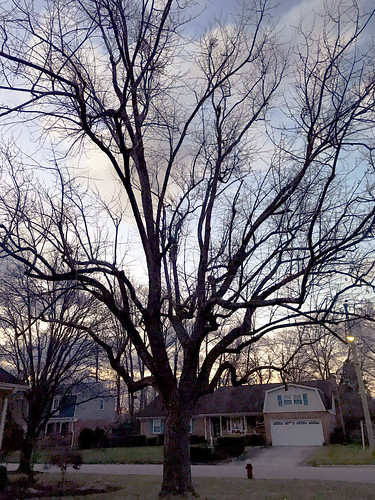 Morning Light January First 2018 | by byzantiumbooks