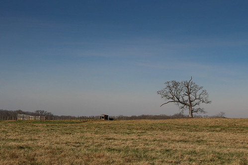 canon 6d sigma 50mm14 art lens upstate townvillesc southcarolina farm pasture fence grazing oak scenic pastoral southern america usa landscape december winter sunshine green southernlife
