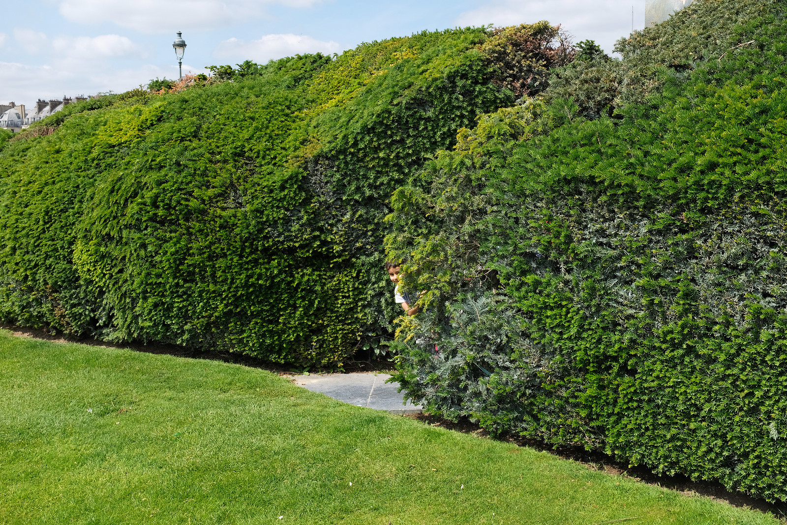 A boy peeks out from a hedge