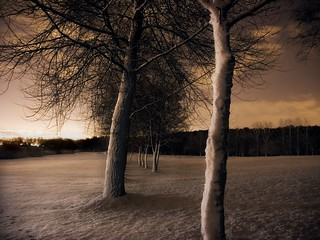 Snow-blasted trees | by tricky (rick harrison)
