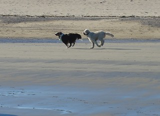 Dogs at Revere Beach   by Elizabeth Thomsen