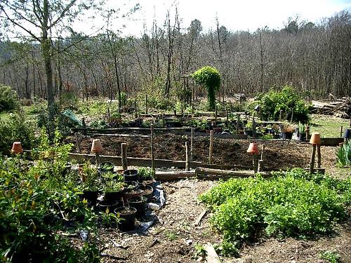 April 2006 fresh coriander   by hardworkinghippy : La Ferme de Sourrou