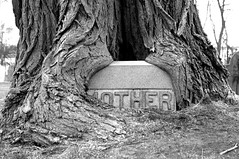 (S)MOTHER | by d4vidbruce