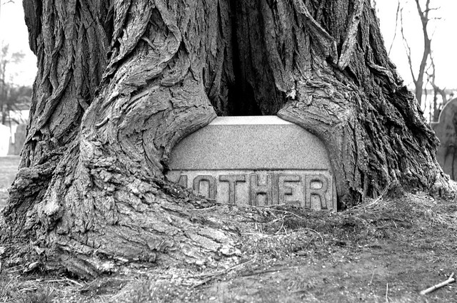 (S)MOTHER
