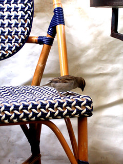 bird on a chair | by *heloise*