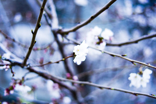 Blossom | by nucof