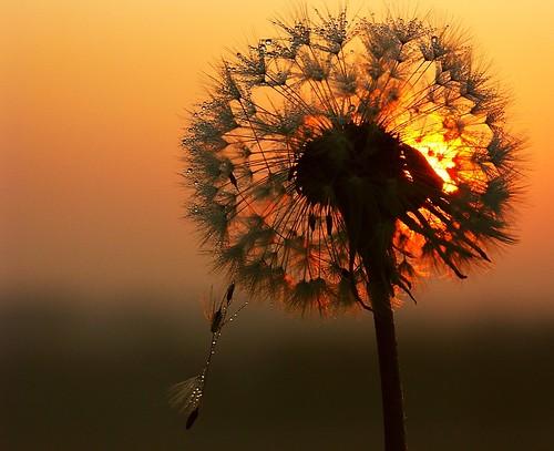 dawn passion by algo