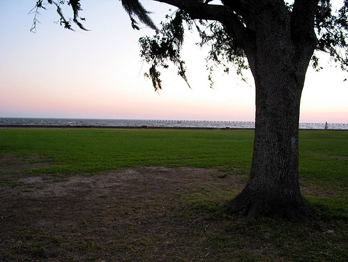 sunset sky lake tree grass louisiana ground lakefront pontchartrain