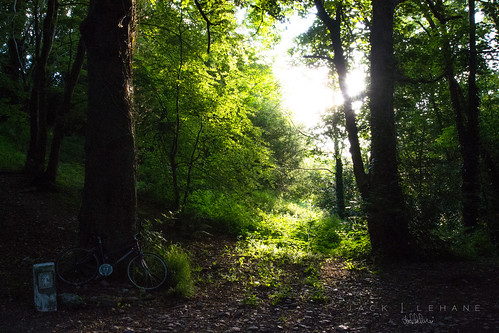 trees ireland sun sunlight bike bicycle sunrise daylight woods walk cork hike cycle garryduff