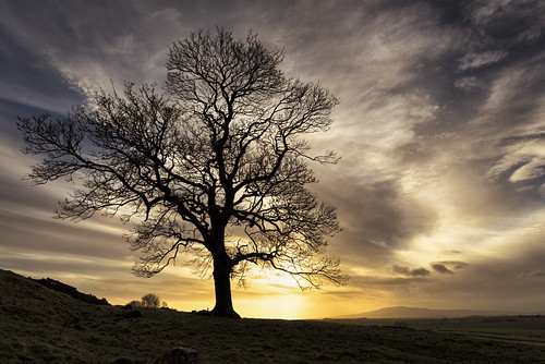 tree sunset clouds