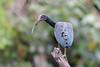 Green Ibis by Cristofer Martins