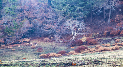 elk needle rock campground trees fog foggy fall autumn grass usalrd outside nature