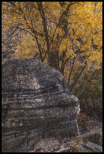 Sabino Canyon #22 2017-18; Banded Gneiss & Arizona Walnut