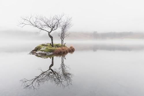 rydal rydalwater lakedistrict cumbria dawn mist fog tree island water calm peaceful zen melvinnicholsonphotography
