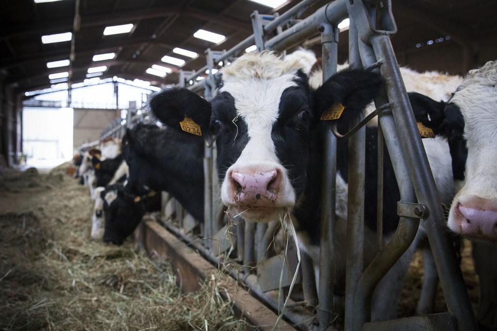 減少肉類和奶製品,改為吃植物性飲食,能將土地還給天然林。照片來源:Anna TH(CC BY-NC-ND 2.0)